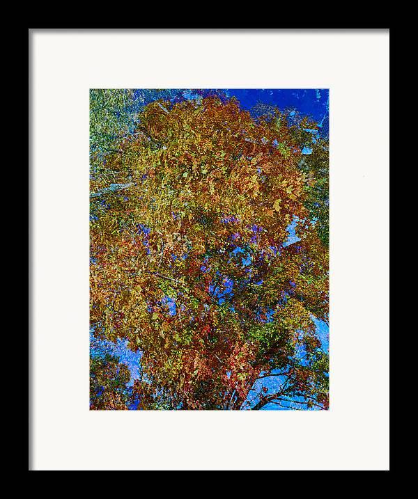 Autumn Framed Print featuring the photograph Study For Autumn 1 by Steve Parrott
