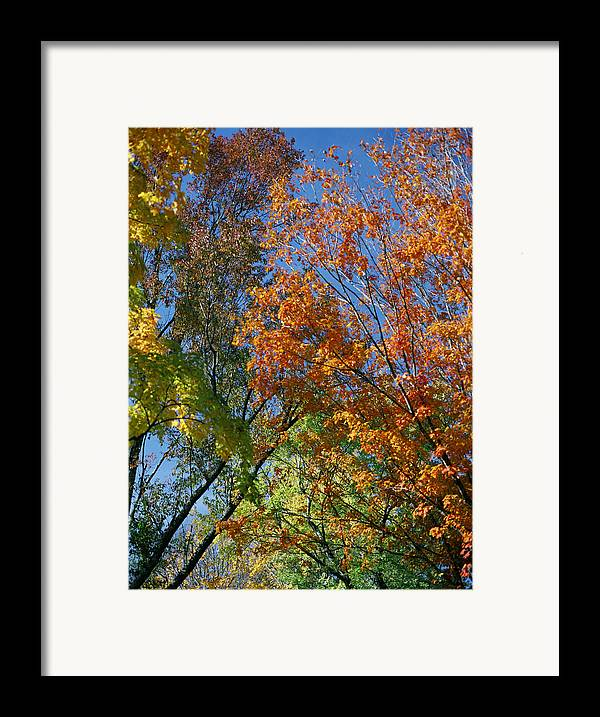 Trees Framed Print featuring the photograph Study For Autumn 2 by Steve Parrott