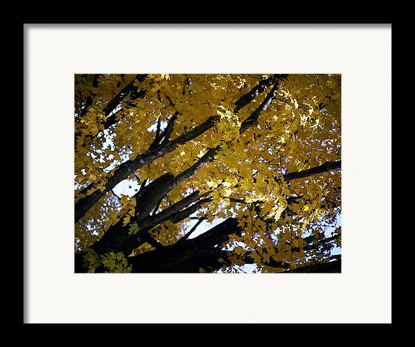 Trees Framed Print featuring the photograph Study For Autumn 3 by Steve Parrott
