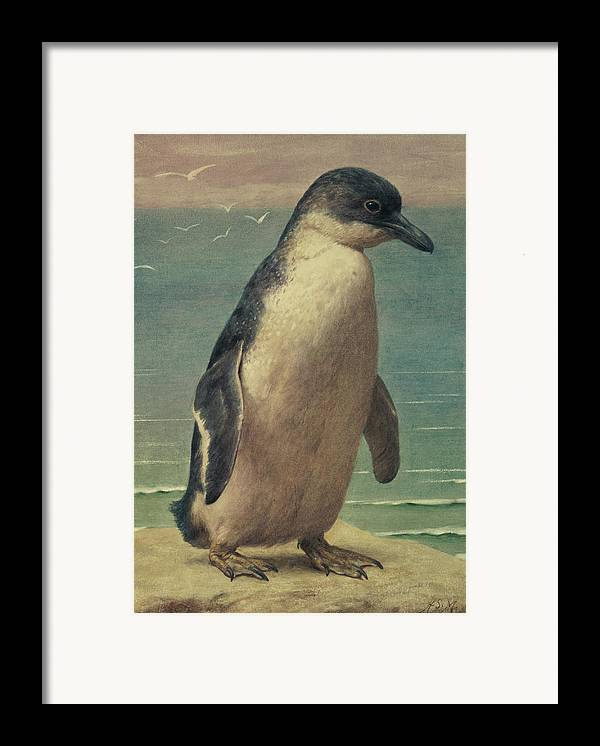Study Framed Print featuring the painting Study Of A Penguin by Henry Stacey Marks