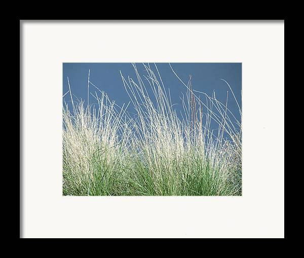 Grass Framed Print featuring the photograph Study Of Grass by Tiffany Vest