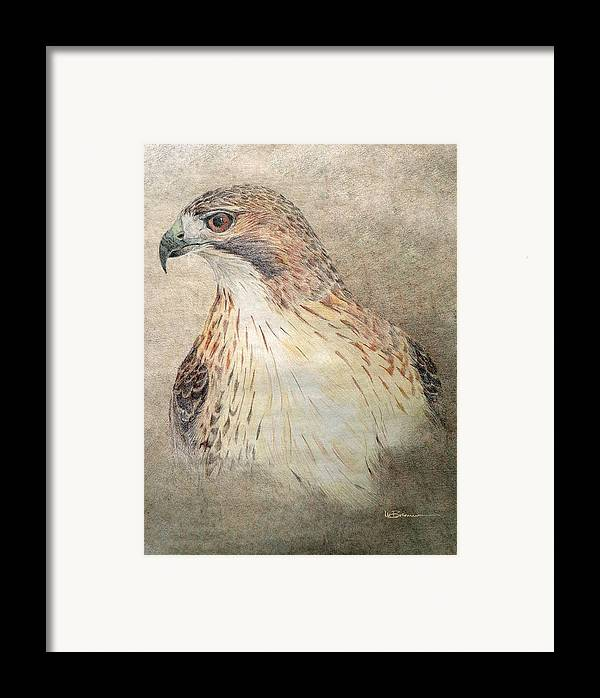 Red-tailed Hawk Framed Print featuring the drawing Study Of The Red-tail Hawk by Leslie M Browning
