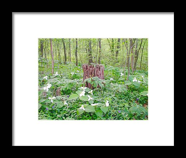 Trees Framed Print featuring the photograph Stump By The Trilliums by Beth Tidd