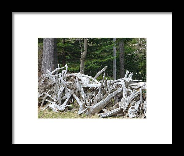 Stump Framed Print featuring the photograph Stumped by Peggy King