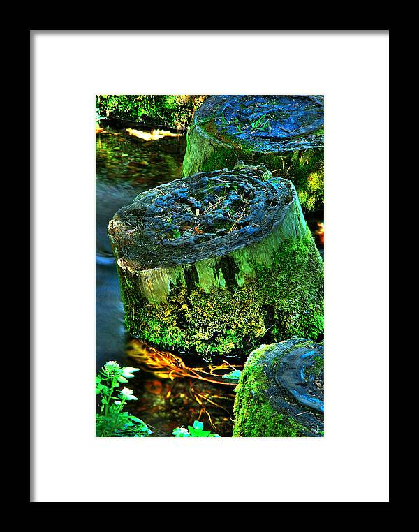 Stump Framed Print featuring the photograph Stumped by Tom Melo
