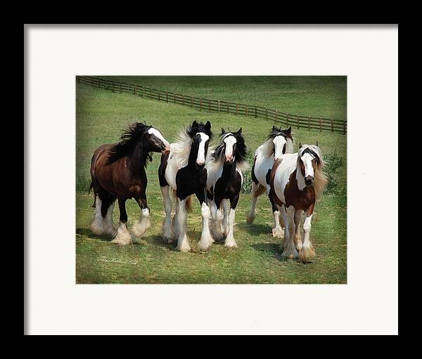Equine Framed Print featuring the photograph Stunning Beauty by Terry Kirkland Cook