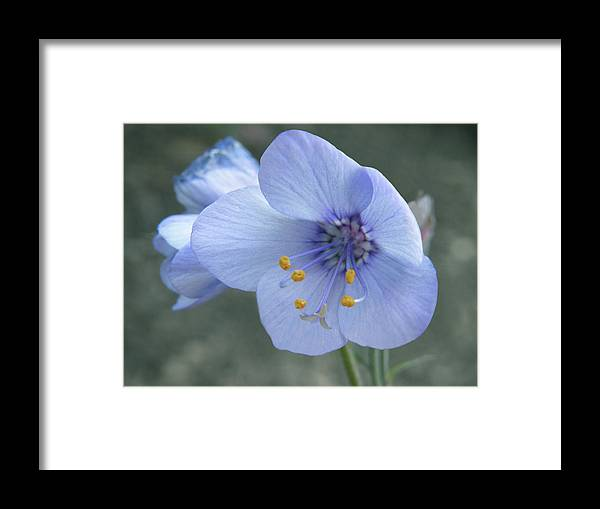 Flower Framed Print featuring the photograph Subtle Elegance by Angela Wile