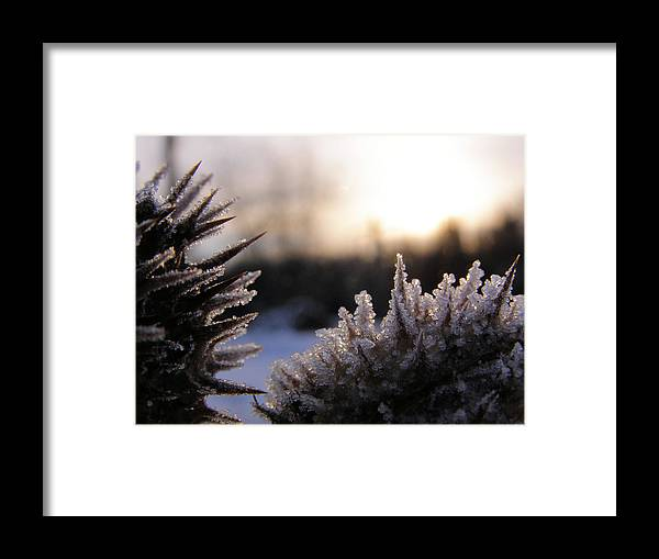 Macro Framed Print featuring the photograph Sugar Crystals by Scott Hovind