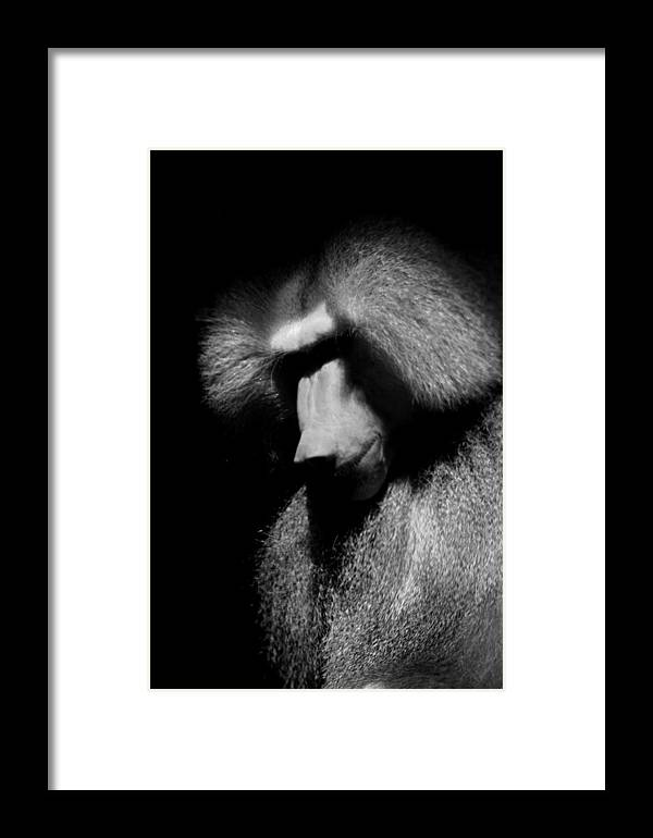 Baboon Framed Print featuring the photograph Sulking Baboon by Brian M Lumley