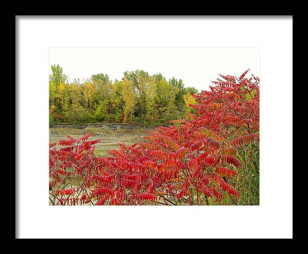 Sumac Framed Print featuring the photograph Sumac by Robert Collier
