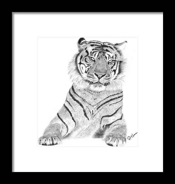 Tiger Artwork Framed Print featuring the drawing Sumatran Tiger by Rosanna Maria