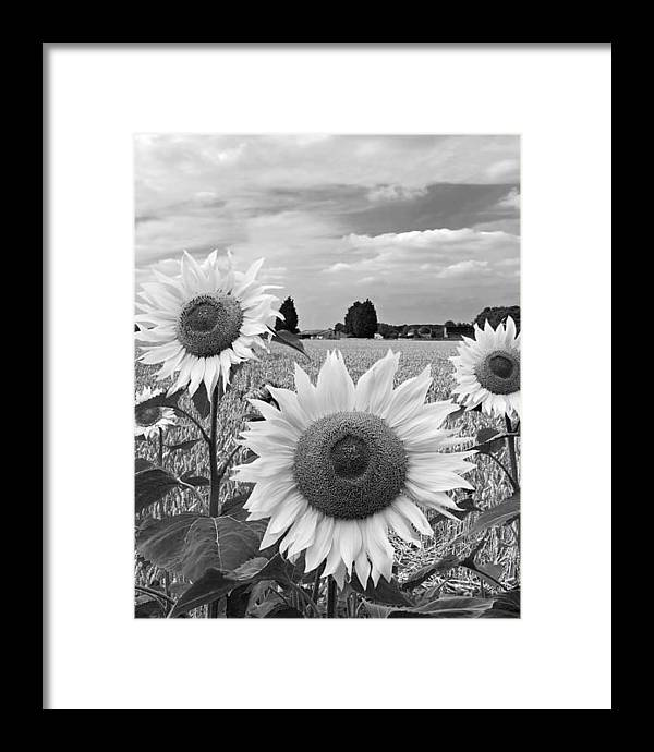 Sumertime On The Farm In Black And White by Gill Billington