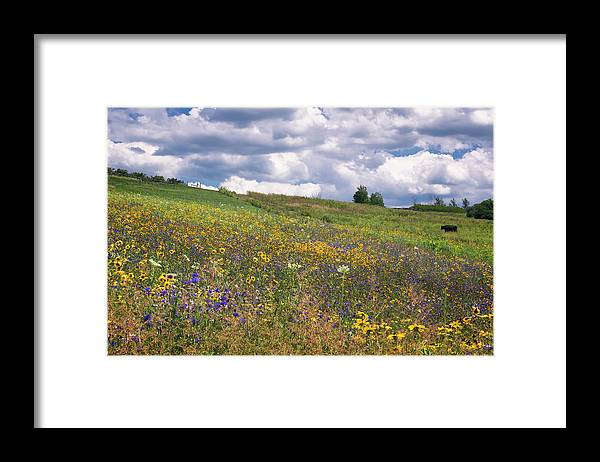 Alysons Orchards Framed Print featuring the photograph Summer Flowers by Tom Singleton