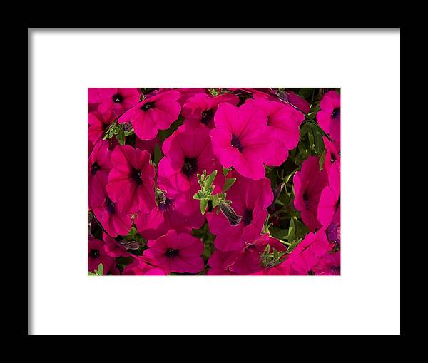 Summer Framed Print featuring the photograph Summer Glamor by Vijay Sharon Govender