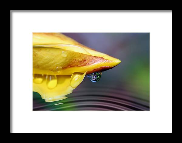 Allamanda Framed Print featuring the photograph Summer Pond by Lesley Smitheringale