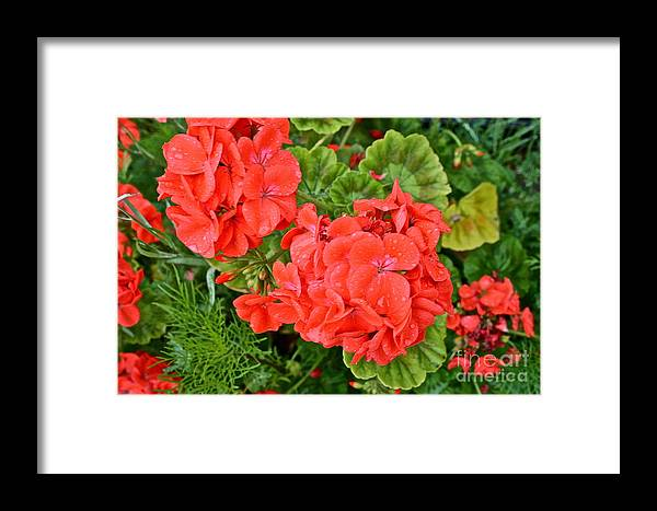 Flowers Framed Print featuring the photograph Summer Rain by Rick Monyahan