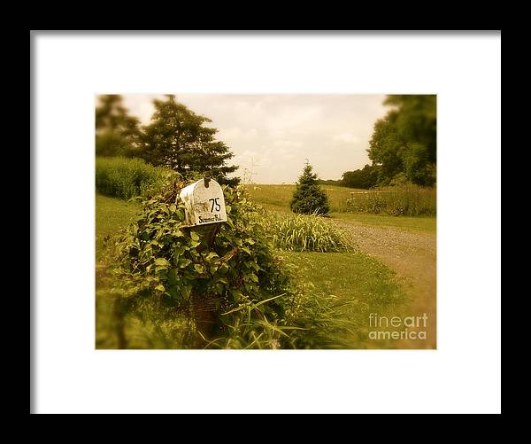 Rural Framed Print featuring the photograph Summer Road by Sergio Geraldes