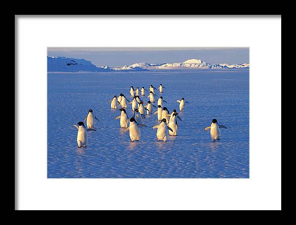Adelie Framed Print featuring the photograph Summer Spirit by Lyn Irvine
