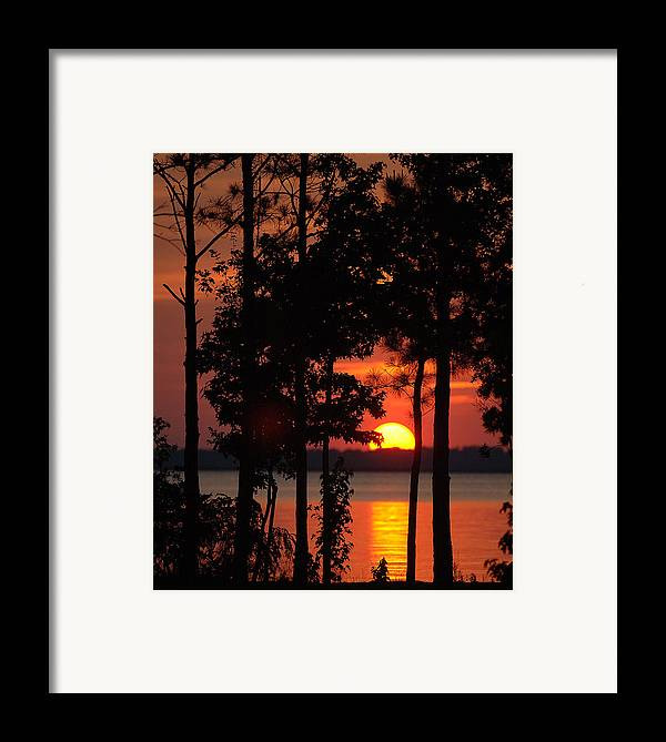 Sunset. Trees Framed Print featuring the photograph Summer Sunset by Travis Aston
