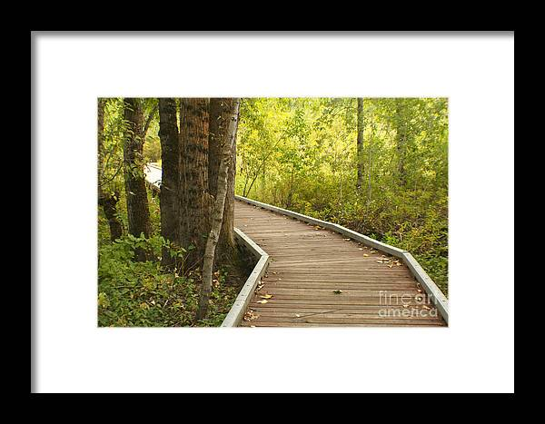 Trail Framed Print featuring the photograph Summer Walk by Idaho Scenic Images Linda Lantzy