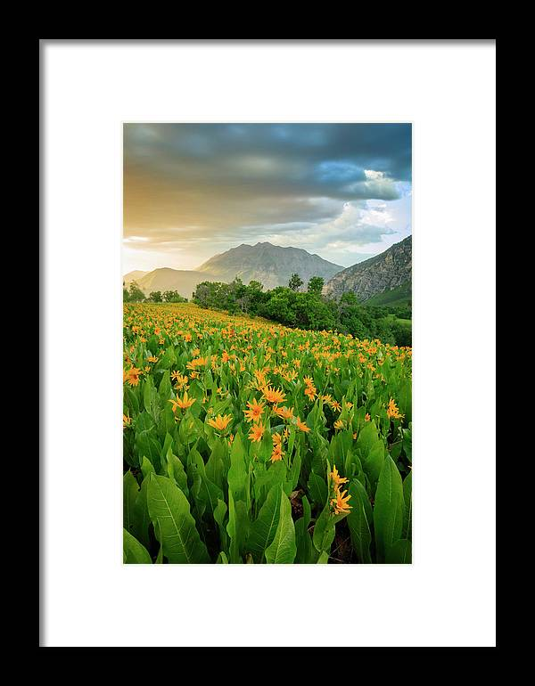 Summer Framed Print featuring the photograph Summer Wildflowers Vertical by Johnny Adolphson