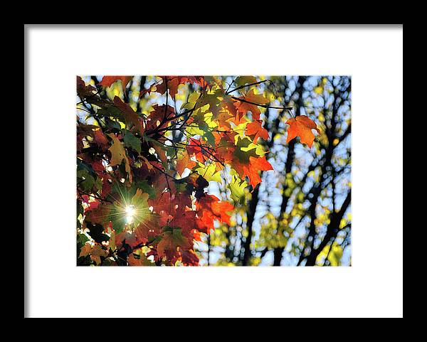 Autumn Framed Print featuring the photograph Summer's Gone by JAMART Photography