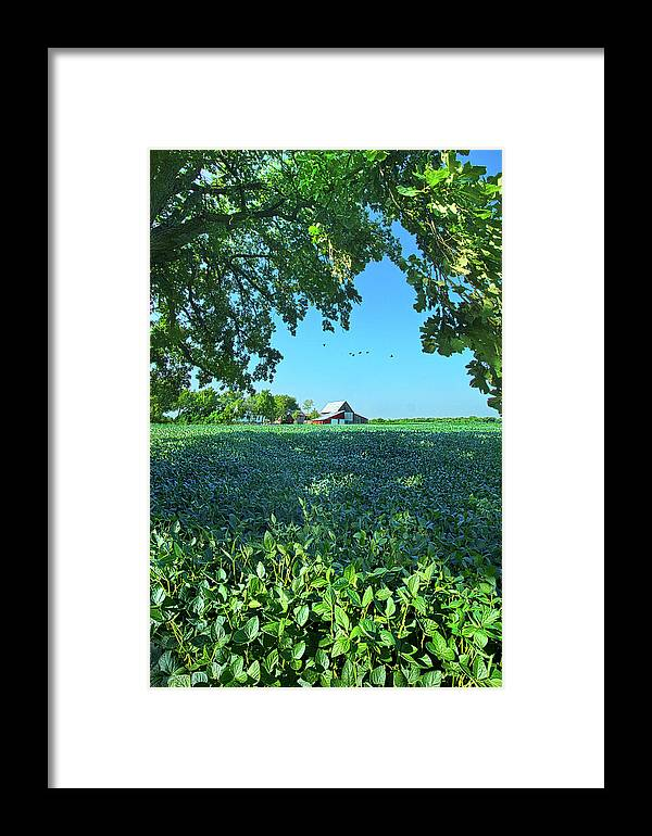 Summer Framed Print featuring the photograph Summertime Blues by Phil Koch