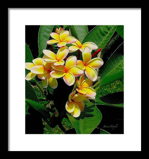 Summertime In Hawaii Framed Print featuring the photograph Summertime In Hawaii by James Temple