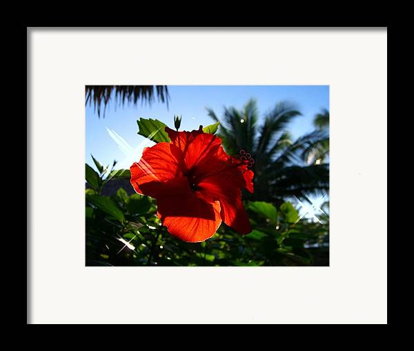 Flowers Flowers Flowers Framed Print featuring the photograph Sun And Flowers by Jonathan Galente