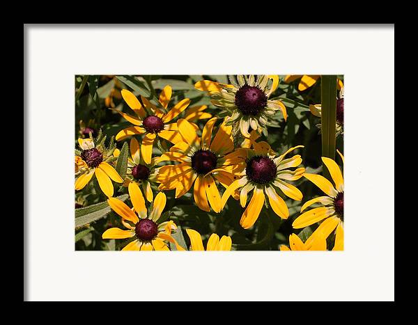 Flower Framed Print featuring the photograph Sun And Shade by Jame Hayes