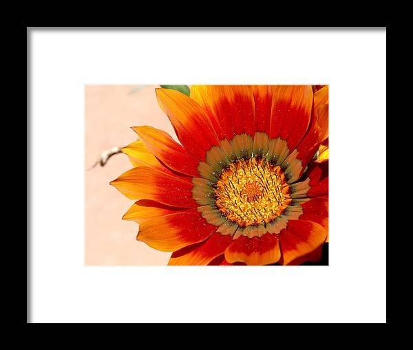 Flower Framed Print featuring the photograph Sun Bloom Of Fire by Edan Chapman