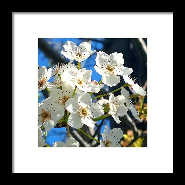 Garden Framed Print featuring the photograph #sun Drenched #tree #blossoms So Sweet by Shari Warren