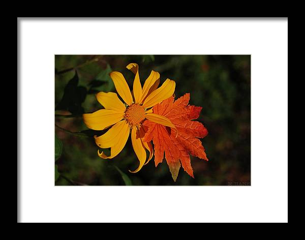 Pop Art Framed Print featuring the photograph Sun Flower And Leaf by Rob Hans