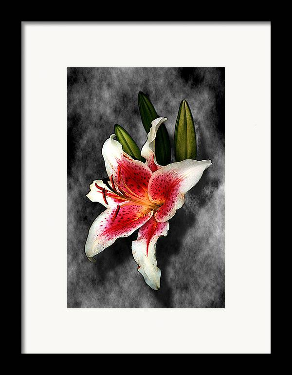 Flower Framed Print featuring the photograph Sun Gazer Lily by Roger Soule