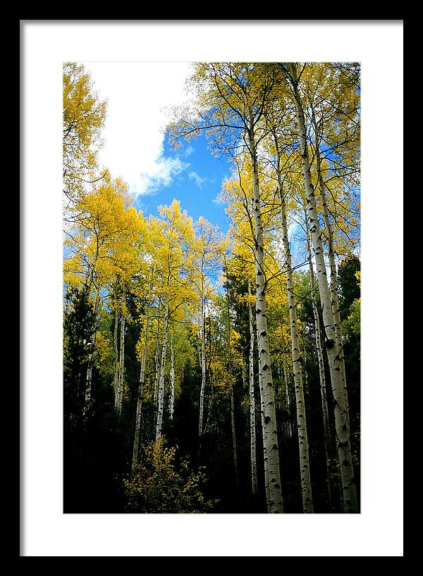 Landscape Framed Print featuring the photograph Sun In The Trees by Lynard Stroud