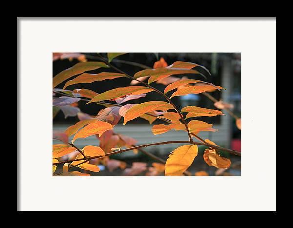 Fall Framed Print featuring the photograph Sun Shing Through by Linda Ebarb
