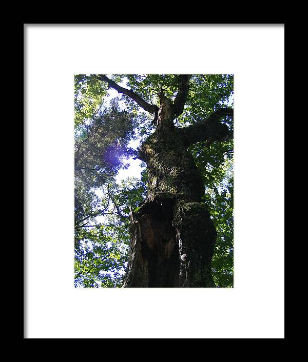 Tree Framed Print featuring the photograph Sun Through Trees by Alison Heckard