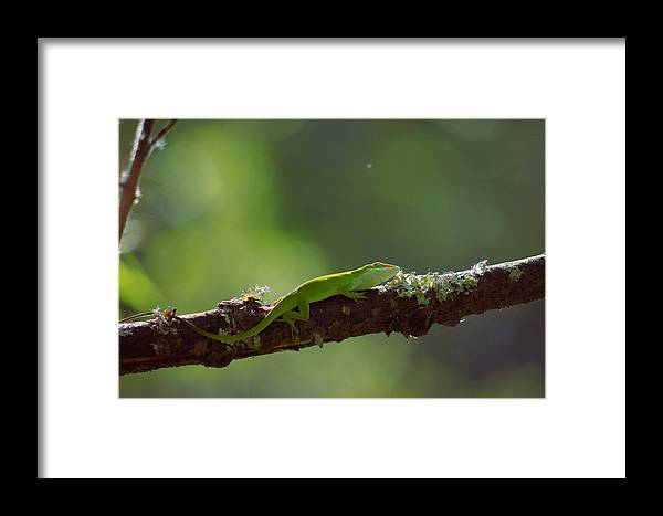 Sunlit Framed Print featuring the photograph Sunbathing by Aaron Rushin