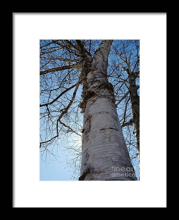 Framed Print featuring the photograph Sunblock by Virginia Levasseur