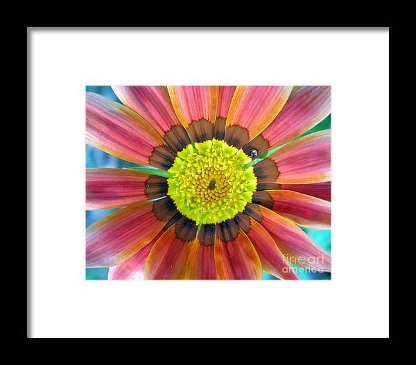 Photography Framed Print featuring the photograph Sunburst by Heather S Huston