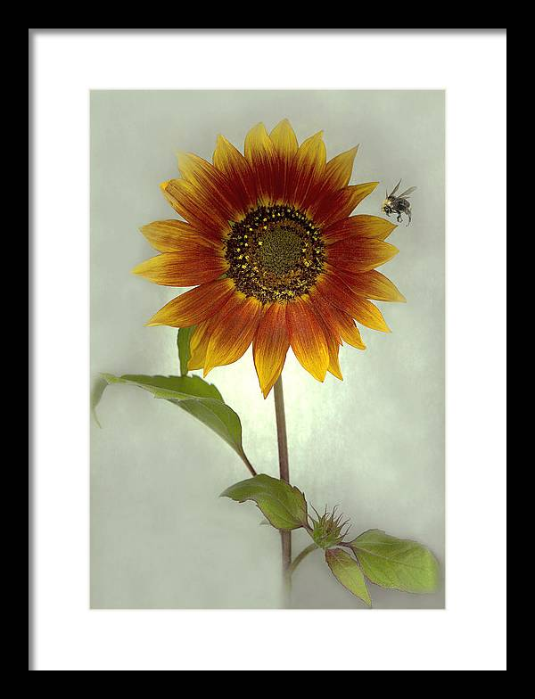 Sunflower Framed Print featuring the mixed media Sunflower and Bee by Sandi F Hutchins