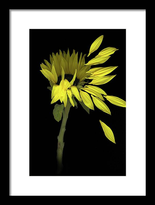Sunflower Framed Print featuring the digital art Sunflower Breeze by Sandi F Hutchins