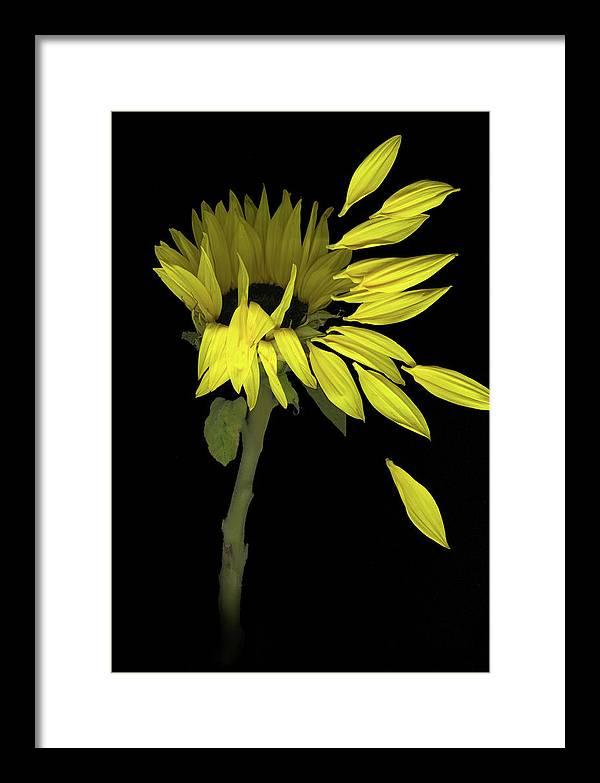 Sunflower Framed Print featuring the digital art Sunflower Breeze by Sandi F Hutchins