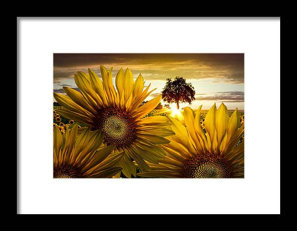 American Framed Print featuring the photograph Sunflower Heaven by Debra and Dave Vanderlaan