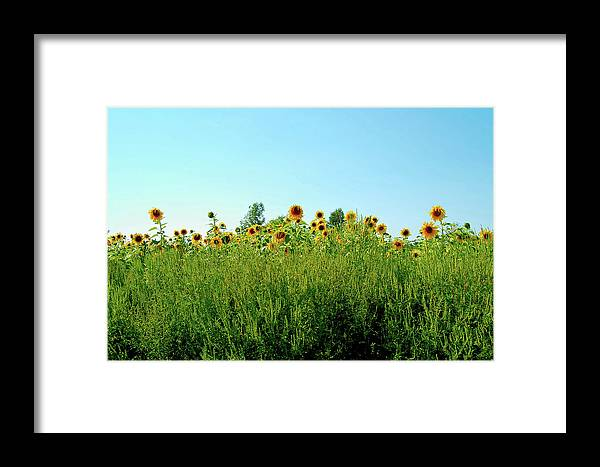 Sunflower Framed Print featuring the photograph Sunflower Horizon by Marcus L Wise