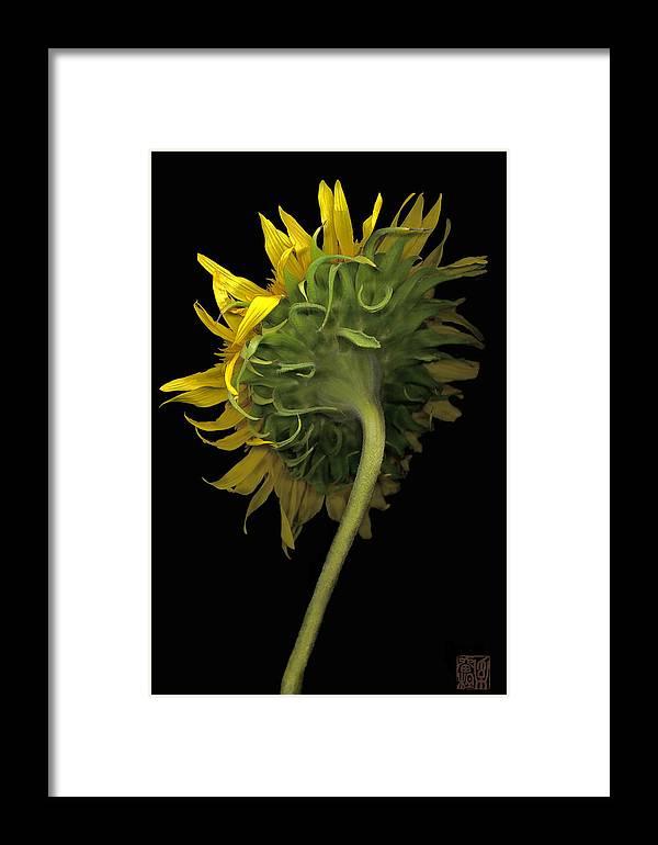 Flower Framed Print featuring the photograph Sunflower by Lloyd Liebes