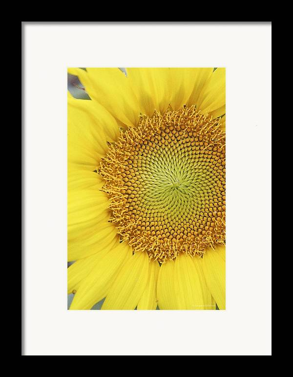 Sunflower Framed Print featuring the photograph Sunflower by Margie Wildblood