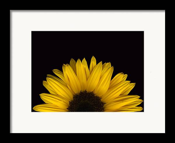 Scanography Framed Print featuring the photograph Sunflower Rising by Deborah J Humphries