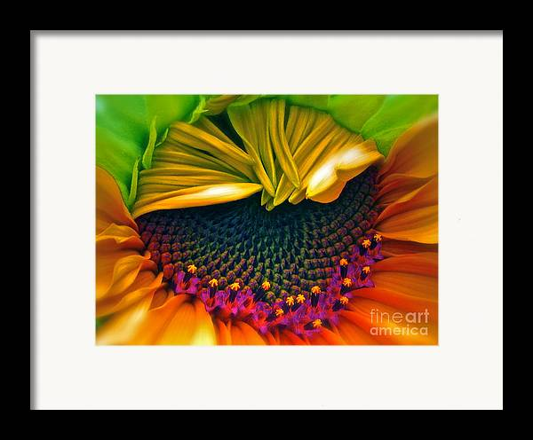 Sunflower Photograph Framed Print featuring the photograph Sunflower Smoothie by Gwyn Newcombe