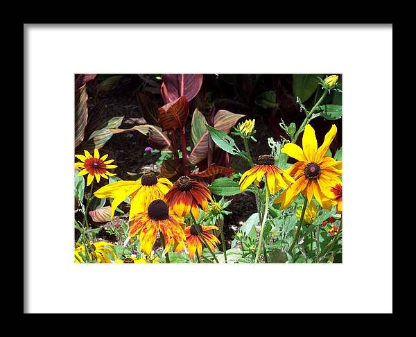 Sunflower Framed Print featuring the photograph Sunflowerland by Jean Booth